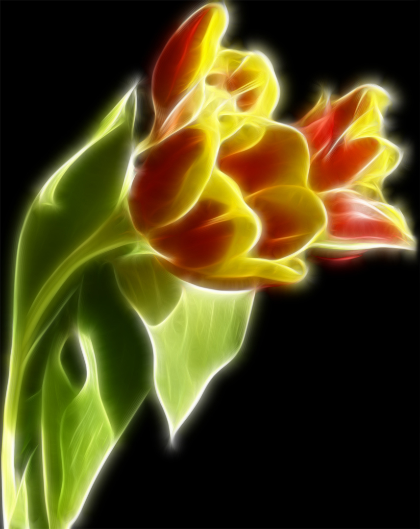 Фрактальные тюльпаны